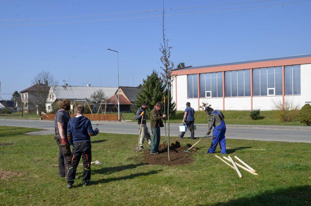 Výsadba stromů v centru obce Pohoří